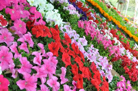 annual plant halls garden center florist one of nj finest florist and garden center