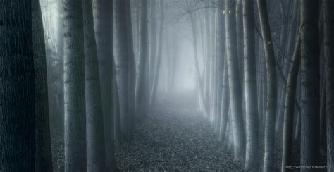 landscapes nature trees dark forests fog hd wallpaper
