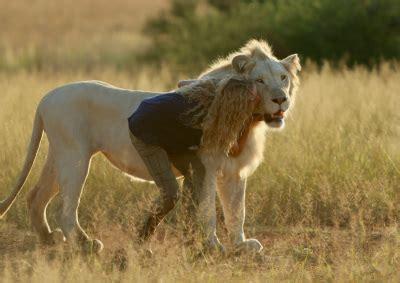 mia  le lion blanc