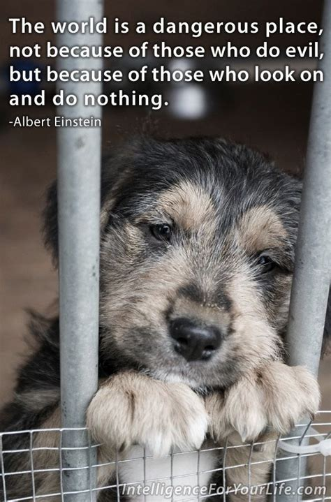 Short Animal Cruelty Quotes