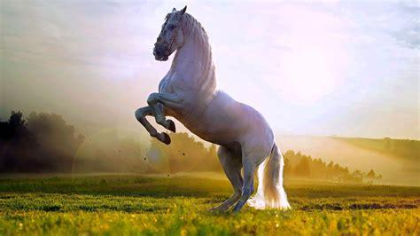 تفسير حلم الحصان في المنام لابن سيرين