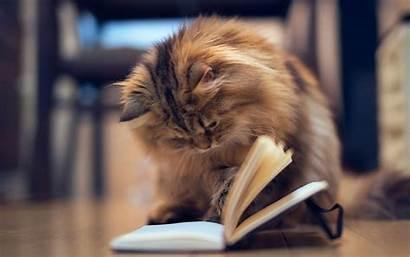 Reading Cat Desktop Wallpapers 4k