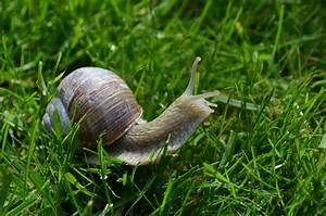 Schnecken Mit Haus : eure hilfe d ngen schnecken gras garden blog ~ Lizthompson.info Haus und Dekorationen