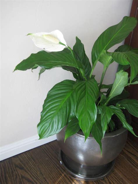 26 best house plant vine identification
