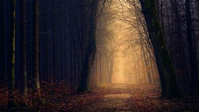 5k Forest Autumn Wallpapers 2880 Ultra