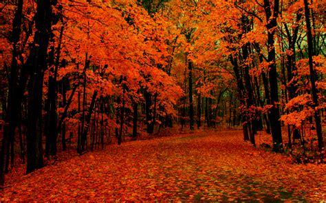 Orange Fall Wallpaper by Orange Fallen Leaves In The Park Widescreen Wallpaper