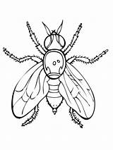 Fly Coloring Pages Fruit Firefly Insect Guy Drawing Printable Supercoloring Flies Fireflies Getdrawings Print Animals Super Categories Clipart Insects Spider sketch template