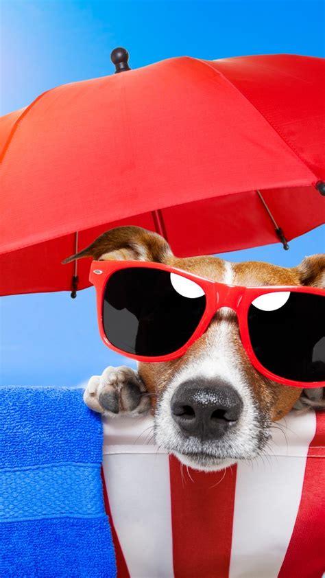wallpaper dog puppy sun summer beach sunglasses