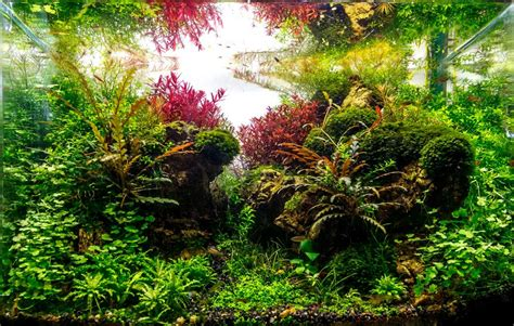 Planted Aquascape by Planted Tank Happy Journey By Adil Chaouki Aquascape
