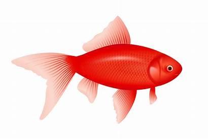 Fish Clipart Clipground