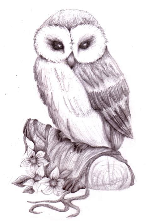 owl drawings  pencil