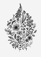 Liverwort Returned sketch template