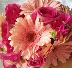 Gerbera Daisy Bouquet Pictures