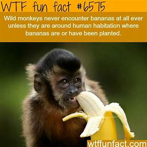 1433 Best Images About Facts On Pinterest