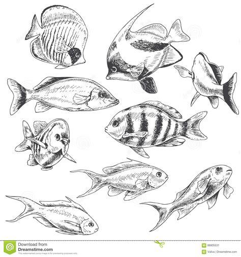 reef stock illustrations  reef stock illustrations