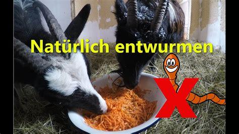 natuerlich entwurmen ohne chemie fuer ziegen pferde huehner