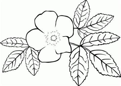 Jasmine Flower Drawing At GetDrawings.com