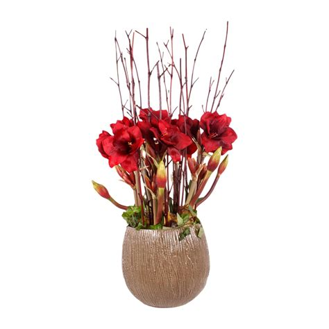 arrosage amaryllis en pot 28 images amaryllis a gift that will keep giving times union