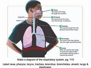 8th Grade Ch 4 Sec 1 Respiratory System