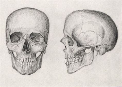 Skull Drawings Tumblr Some Rights Reserved This Work
