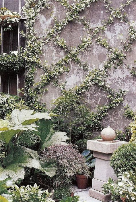 espalier vines star jasmine trained over a wire lattice grid in an espalier form transforms a bare wall