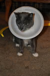 cat cone empty handed but alive in his wfmw cat cone