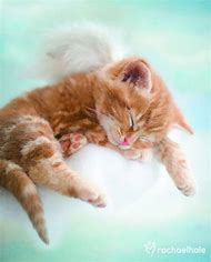Angel Kitty Cat