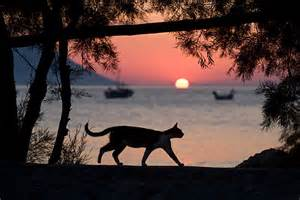 Cat On Beach at Sunset