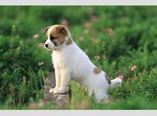 Download HD Dog Wallpapers For Desktop Gallery