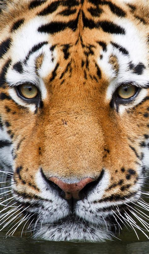 Wonderful Animal Iphone Wallpapers Dotcave