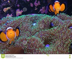 Finding Nemo On A Real Fish Tank Stock Image - Image: 70905875