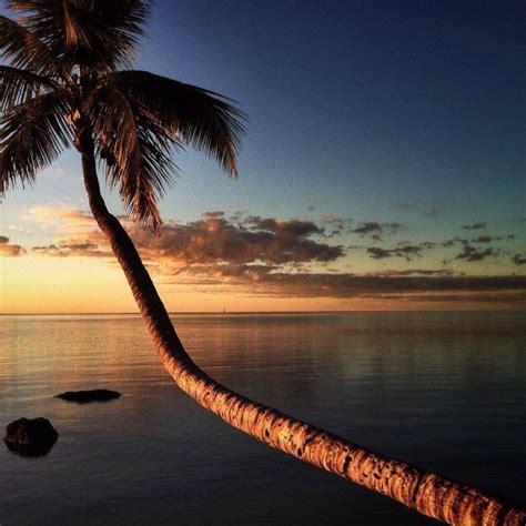 Palm tree sunrise - Shelia LiretteShelia Lirette