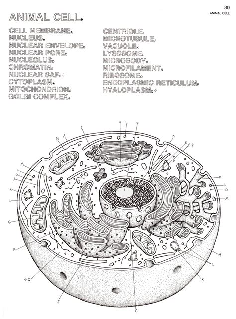 biology coloring pages biology coloring bookjpg