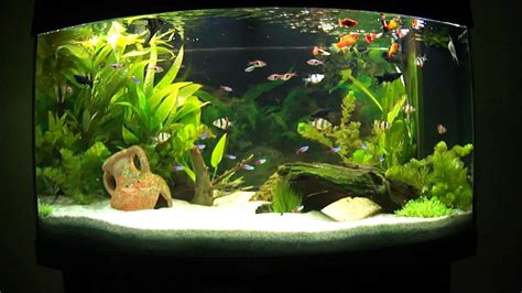 decoration d aquarium d eau douce aquarium d eau douce plant 233 aquascape aquascaping 4