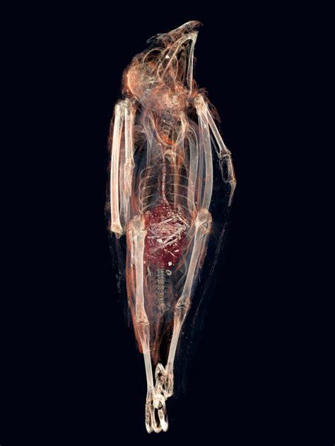ancient egyptian bird mummy