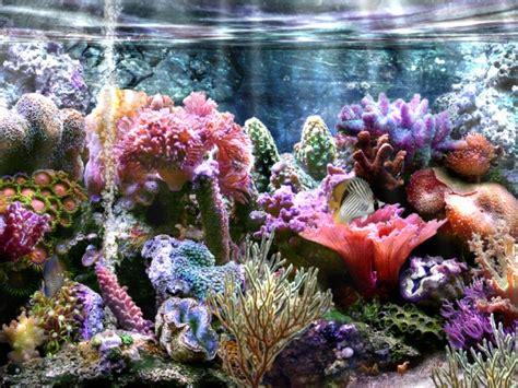 dessin en couleurs 224 imprimer animaux poisson num 233 ro 19130