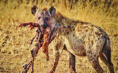 son los animales carnivoros respuestastips