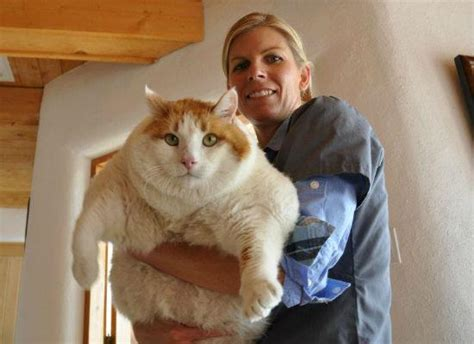 Biggest Cats In The World Coolweirdo