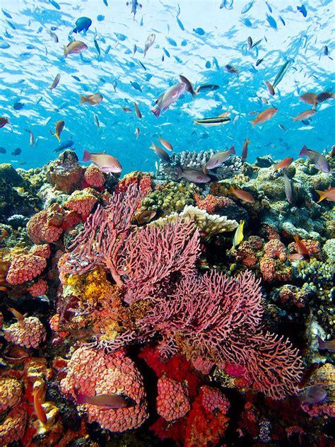 komodo underwater reef dive park national indonesia safari unesco