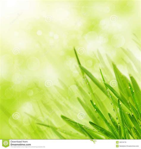 green spring grass  bokeh background royalty  stock