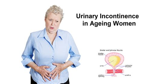 Urinary Incontinence In Older Women  My Gynae. Disability Lawyers In Charlotte Nc. Ira Contribution Limit Internet Phone And Fax. Insurance Policy Definitions. Ppc Marketing Companies Mountainside Rehab Ct. Executive Leadership Courses. Gas Fireplace Will Not Stay Lit. Nissan Dealers In Charlotte Nc. Best Online Investment Firms