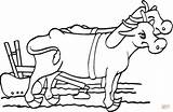 Coloring Oxen Plow Ox Drawing Beef Clipart Cattle Printable Dots Drawings sketch template