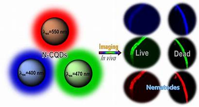 Carbon Quantum Dots Imaging Cell Fluorescent Doped