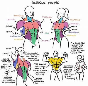 23 Best Images About Character Anatomy