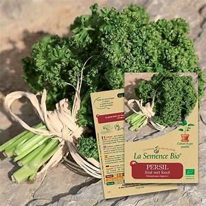 Semis De Persil : graines persil fris vert fonc bio ~ Dallasstarsshop.com Idées de Décoration