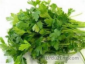 parsley Urdu Meaning