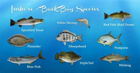 Alabama Inshore Fishing, Al Back Bay Species, Speckled