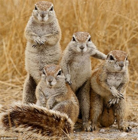 squirrels animal facts and pictures all wildlife photographs