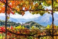 Wilder Wein Vermehren : wilder wein im winter so sch tzen sie ihn richtig ~ Orissabook.com Haus und Dekorationen