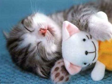 chambre gain de place les images de chaton mignon qui vont vous donner un grand